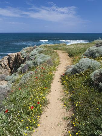 Coastal Path with Spring Flowers, Near Chania, Chania Region, Crete, Greek Islands, Greece, Europe by Stuart Black