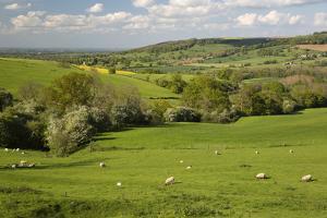 Cotswold Landscape, Near Winchcombe, Cotswolds, Gloucestershire, England, United Kingdom, Europe by Stuart Black