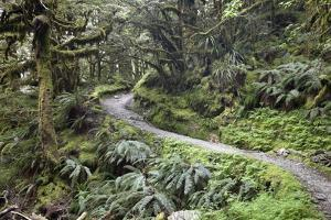Ferns and Moss in Forest Near Lake Mackenzie, Routeburn Track, Fiordland National Park by Stuart Black