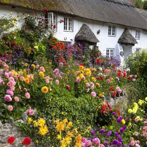 Flower Fronted Thatched Cottage, Devon, England, United Kingdom, Europe by Stuart Black
