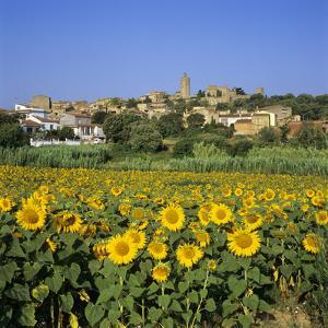 Hilltop Village Above Sunflower Field, Pals, Catalunya (Costa Brava), Spain by Stuart Black
