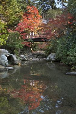 Japanese Bridge in Momijidani Park (Japanese Maple Park) in Autumn by Stuart Black