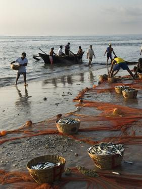 Local Fishermen Landing Catch, Benaulim, Goa, India, Asia by Stuart Black