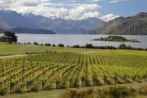 Rippon Vineyard on Lake Wanaka, Wanaka, Otago, South Island, New Zealand, Pacific by Stuart Black
