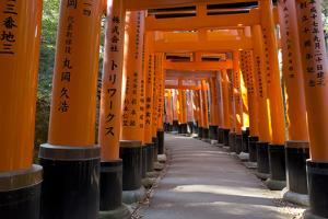 Senbon Torii (1,000 Torii Gates), Fushimi Inari Taisha Shrine, Kyoto, Japan by Stuart Black