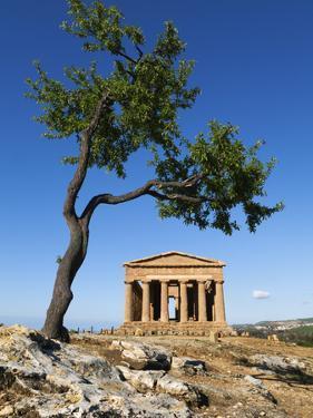 Tempio Di Concordia (Concord) and Almond Tree, Valle Dei Templi, UNESCO World Heritage Site, Agrige by Stuart Black