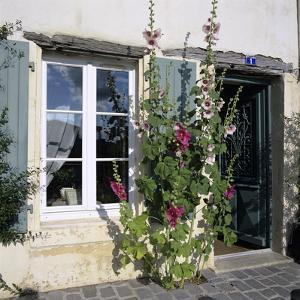 Typical Scene of Shuttered Windows and Hollyhocks, St. Martin, Ile de Re, Poitou-Charentes, France by Stuart Black