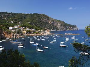 View over Bay, Aiguablava, Near Begur, Costa Brava, Catalonia, Spain, Mediterranean, Europe by Stuart Black