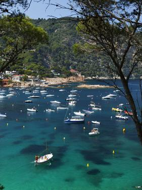 View over Bay, Aiguablava, Near Begur, Costa Brava, Catalonia, Spain, Mediterranean, Europe by Stuart Black