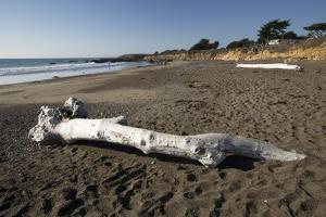 Driftwood on Beach by Stuart