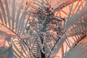 Infrared Conservatory One by Stuart Haury