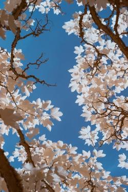 spring by Stuart Haury