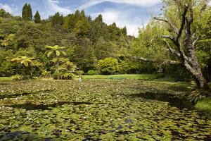 Lily Pond at Rapaura Water Gardens by Stuart
