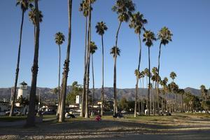 Palm Trees Behind Beach by Stuart
