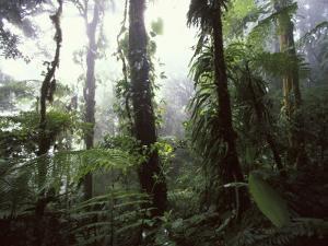 Monteverde Cloud Forest, Costa Rica by Stuart Westmoreland