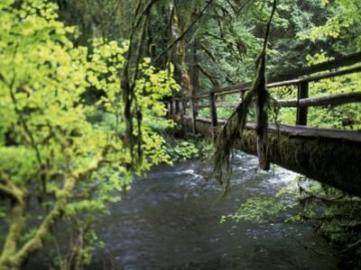 Sol Duc Creek in Old-Growth Rainforest, Olympic National Park, Washington, USA