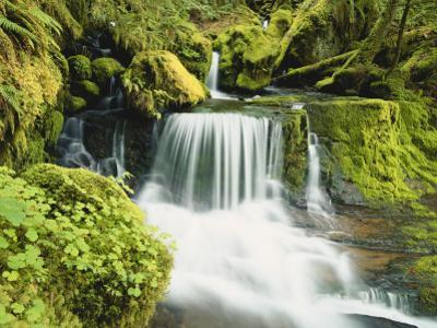 Waterfall in Willamette National Forest, Oregon, USA by Stuart Westmoreland