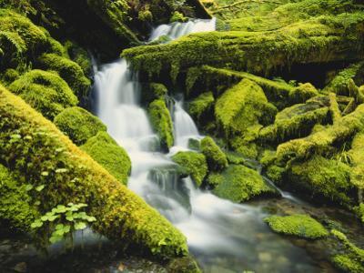 Waterfall over Moss Covered Rock, Olympic National Park, Washington, USA