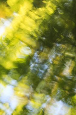 Abstract of blurred trees and water. by Stuart Westmorland