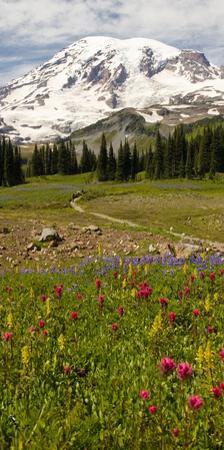 Alpine Wildflowers, Mt. Rainier National Park, Washington State, USA by Stuart Westmorland