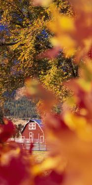 Autumn colors and barn in eastern Oregon. by Stuart Westmorland