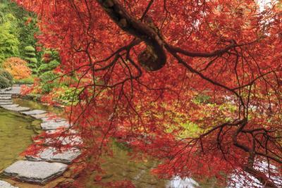 Autumn colors, British Columbia, Canada by Stuart Westmorland