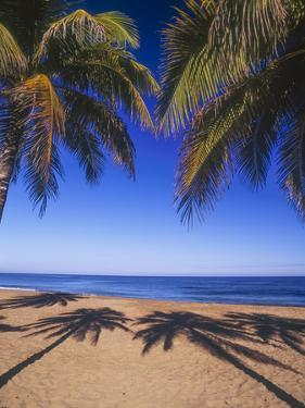 Beach of the Peak, Puerto Rico. Palm trees and their shadows on beach. by Stuart Westmorland