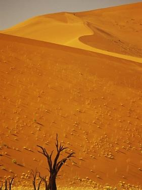 Camelthorn Trees Below Sand Dunes by Stuart Westmorland
