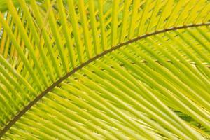Coconut Palm Fronds, Honduras, Central America by Stuart Westmorland