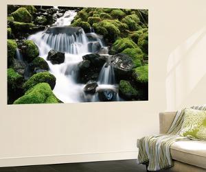 Creek Near Sol Duc Falls, Olympic National Park, Washington State, USA by Stuart Westmorland