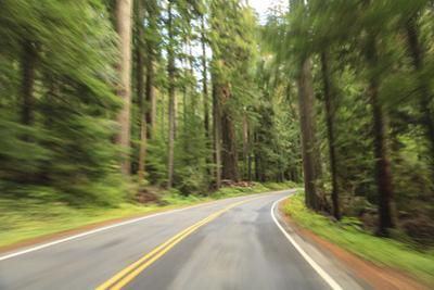Driving Through Forest, Fall, Mt. Rainier National Park, Wa, USA
