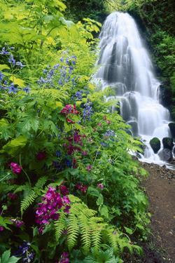 Fairy Falls, wildflowers, Columbia Gorge, Oregon by Stuart Westmorland