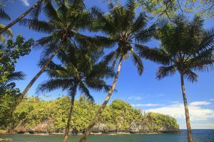 Hawaiian Tropical Botanical Gardens, near Hilo, Big Island, Hawaii, USA Palm trees. by Stuart Westmorland