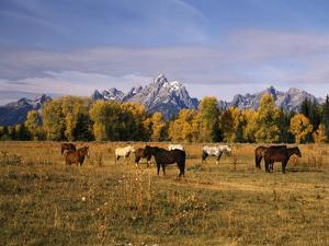 Horses on Moran Junction at Grand Teton National Park, Wyoming, USA by Stuart Westmorland