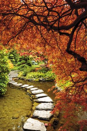 Japanese Maples in the fall, British Columbia, Canada by Stuart Westmorland