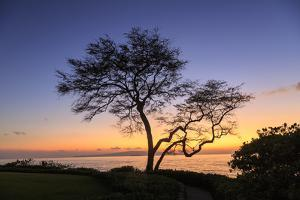 Maui, Hawaii, USA. Trees by the ocean at sunset. by Stuart Westmorland