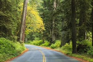 Prairie Creek area, Redwoods State Park, Coastal Redwoods, California, USA by Stuart Westmorland