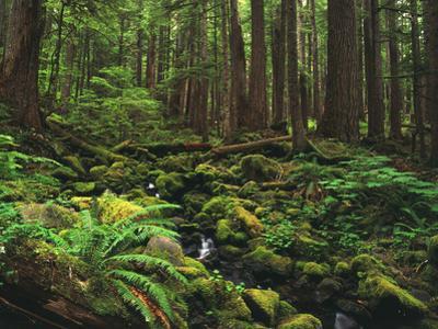 Rainforest, Mossy Rocks, Mt Rainier National Park, Washington, USA