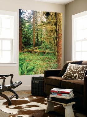 Rainforest, Olympic National Park, Washington State, USA by Stuart Westmorland