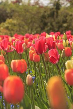 Spring flowers, Butchart Gardens, Saanich Peninsula, Victoria, British Columbia, Canada by Stuart Westmorland