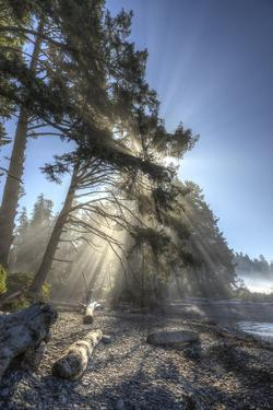 Sun streaming through trees, Juan De Fuca Trail, near Jordan River, Vancouver Island, British Colum by Stuart Westmorland