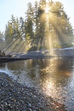 Sun streaming through trees, Juan De Fuca Trail, near Jordan River, Vancouver Island, British Colum by Stuart Westmorland