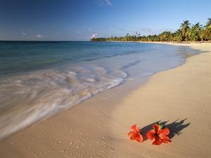 Tropical Paradise, Tabyana Beach, Roatan, Honduras by Stuart Westmorland