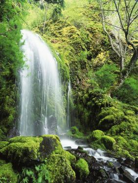 View of Waterfall, Columbia River Gorge, Mt Hood National Forest, Oregon, USA by Stuart Westmorland