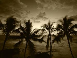 View Palm Trees on Beach, Big Islands, Kona, Hawaii, USA by Stuart Westmorland