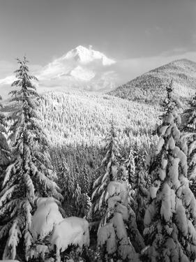 Winter Frost Trees on Mt. Hood, Mt Hood National Forest, Oregon, USA by Stuart Westmorland