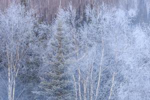 Winter scenic near Fairbanks, Alaska by Stuart Westmorland