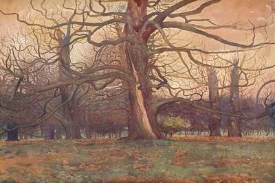 https://imgc.allpostersimages.com/img/posters/study-of-an-oak-tree-c1878-1903-1904_u-L-Q1EFG7S0.jpg?artPerspective=n