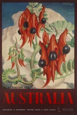 Sturt's Desert Pea, Australia Travel Poster