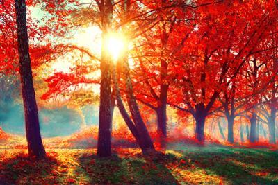 Autumn. Fall Scene. Beautiful Autumnal Park. Beauty Nature Scene. Autumn Landscape, Trees and Leave by Subbotina Anna